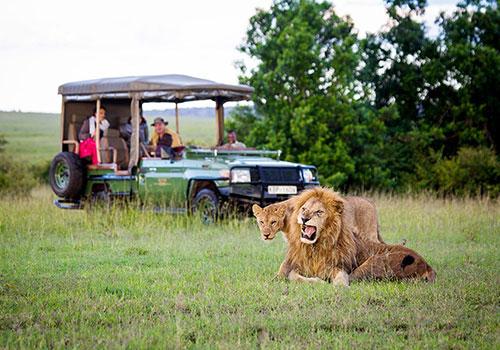 8 days classic combined Kenya and Tanzania safari: Lake Nakuru/Masai Mara/Serengeti/Ngorongoro