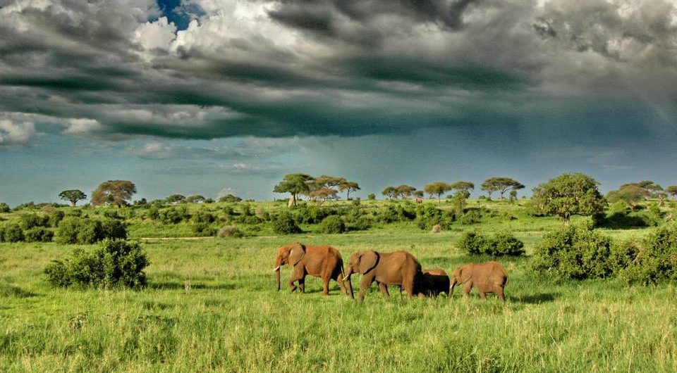 Tarangire-elephants-scenery-region