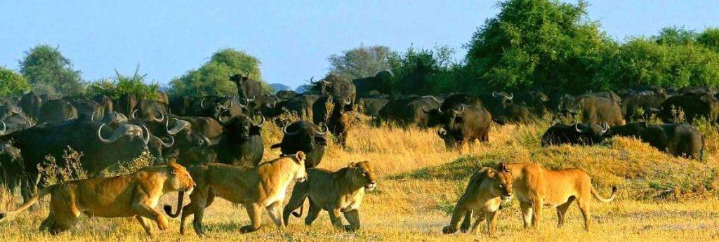 14 DAYS ROMANTIC EAST AFRICA SAFARI: SAMBURU /ABERDARES/ L