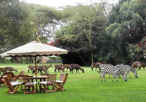 Safari di camping di Kenya