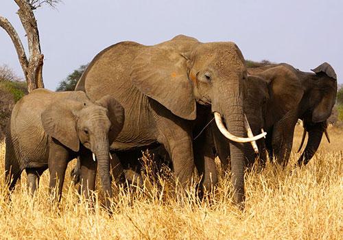 3 days Amboseli Kenya budget safaris
