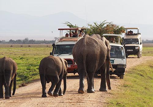 3 days Amboseli Kenya Lodge Safari