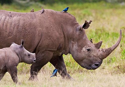 Kenya lan Tanzania Safaris