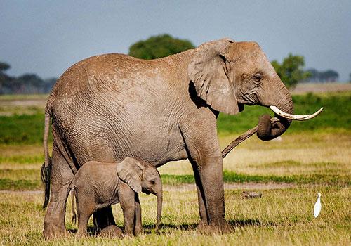 12 days Kenya and Tanzania Budget Holiday Safari