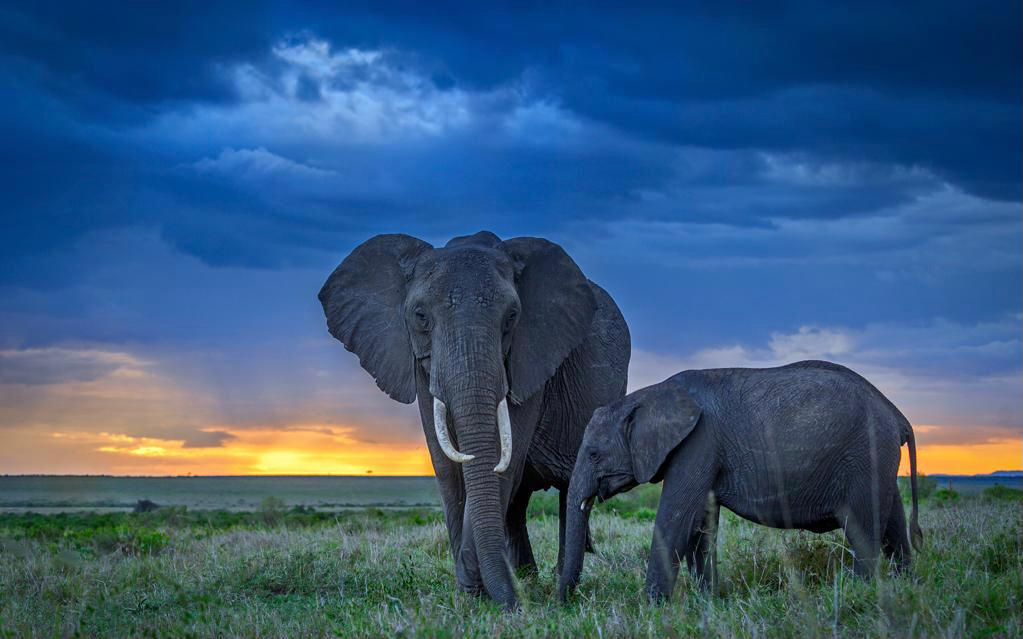 10 days exciting Kenya Safari Holiday