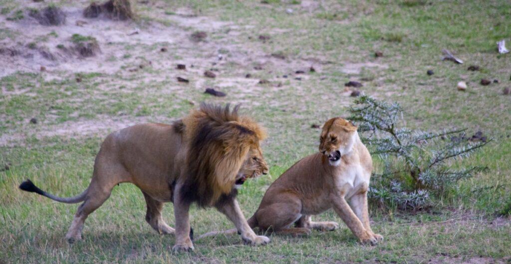 12 days amazing Kenya Tanzania budget safari holiday