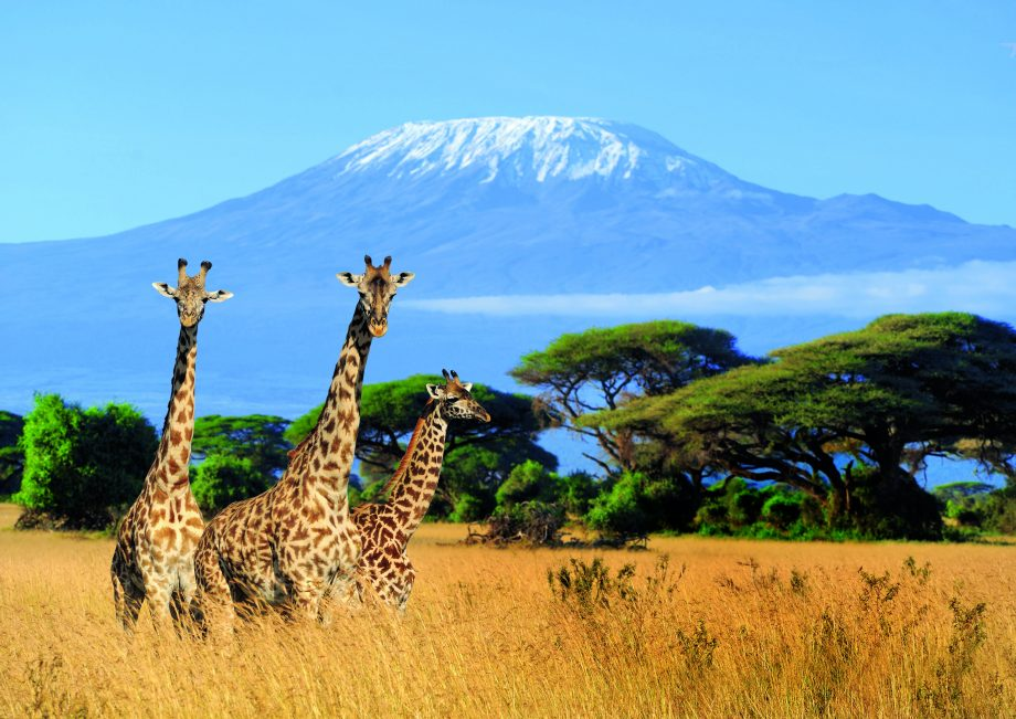 13 days best of Kenya Tanzania safari tour