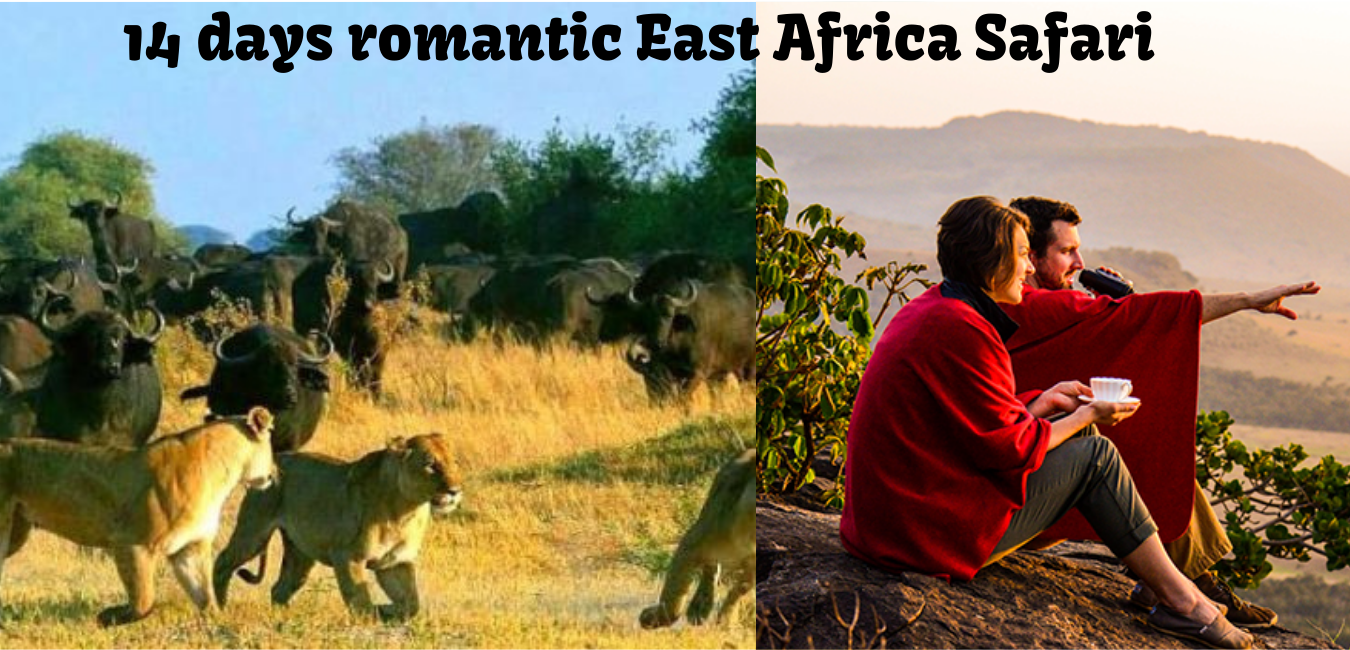 14 days romantic East Africa safari