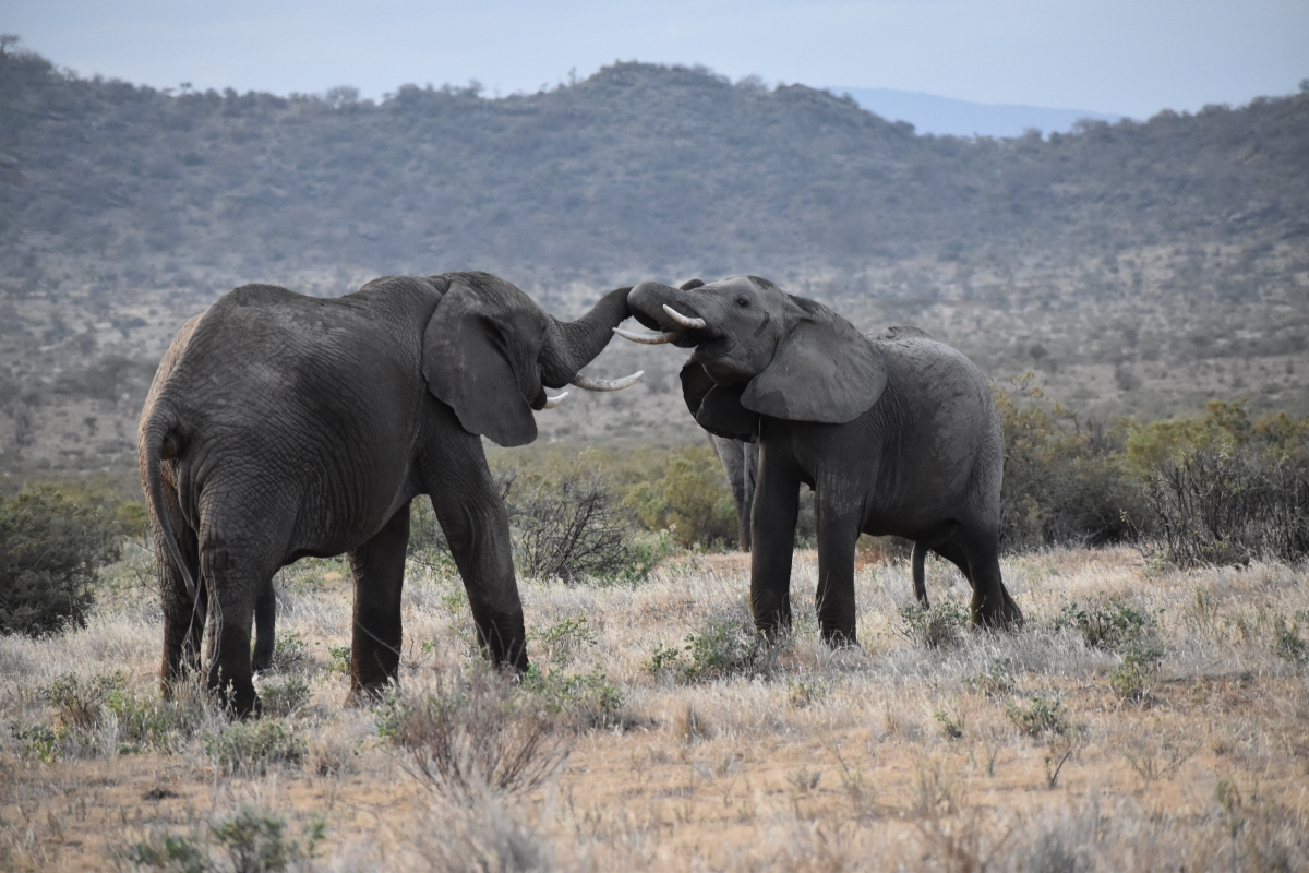 3 days Kenya budget safari Amboseli