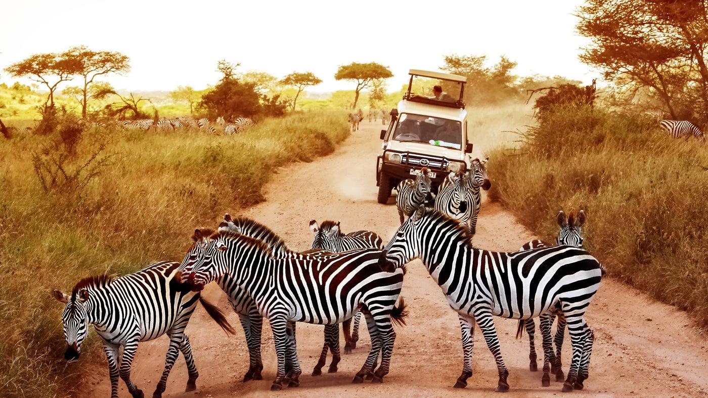 3 days tanzania budget safari