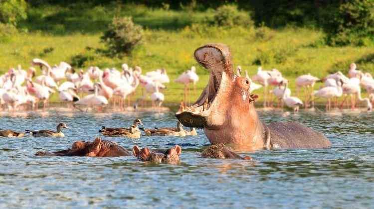4 day lodge safari Masai Mara-Lake Nakuru