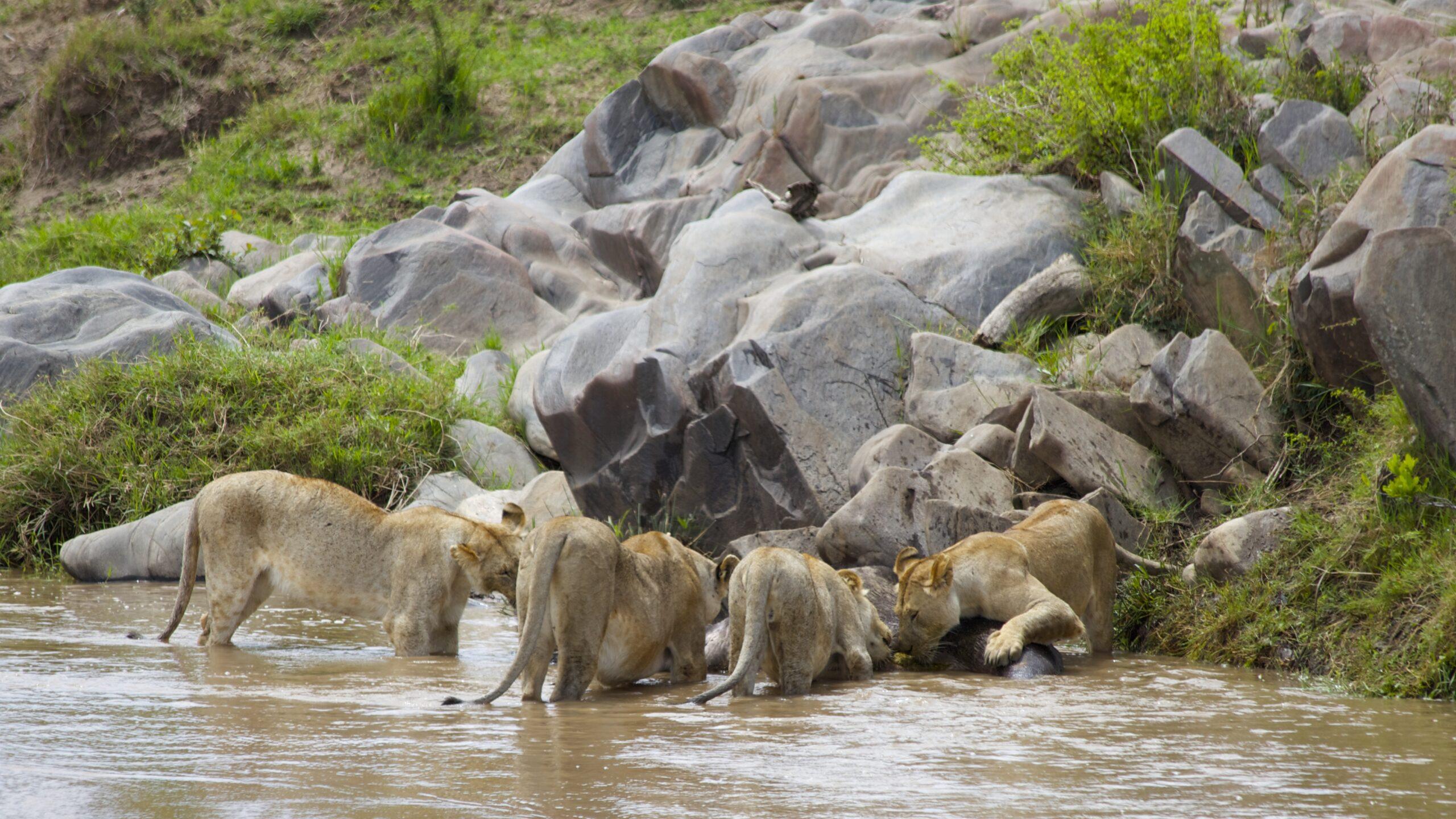 4 days budget safari in Kenya