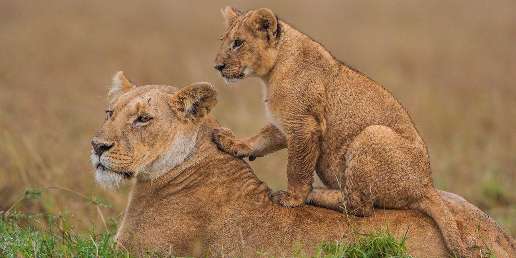 5 Day Kenya Lodge Safari Maasai Mara & the Lakes