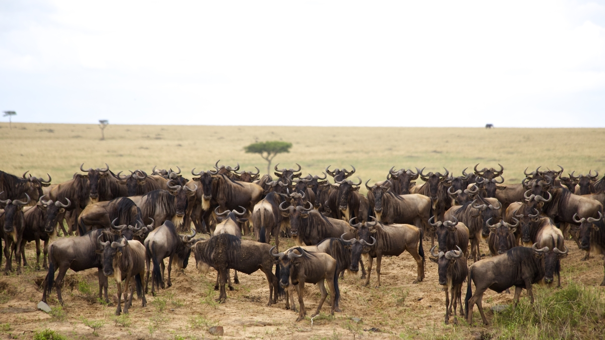 5 days best time to visit Tanzania - Migration Safari