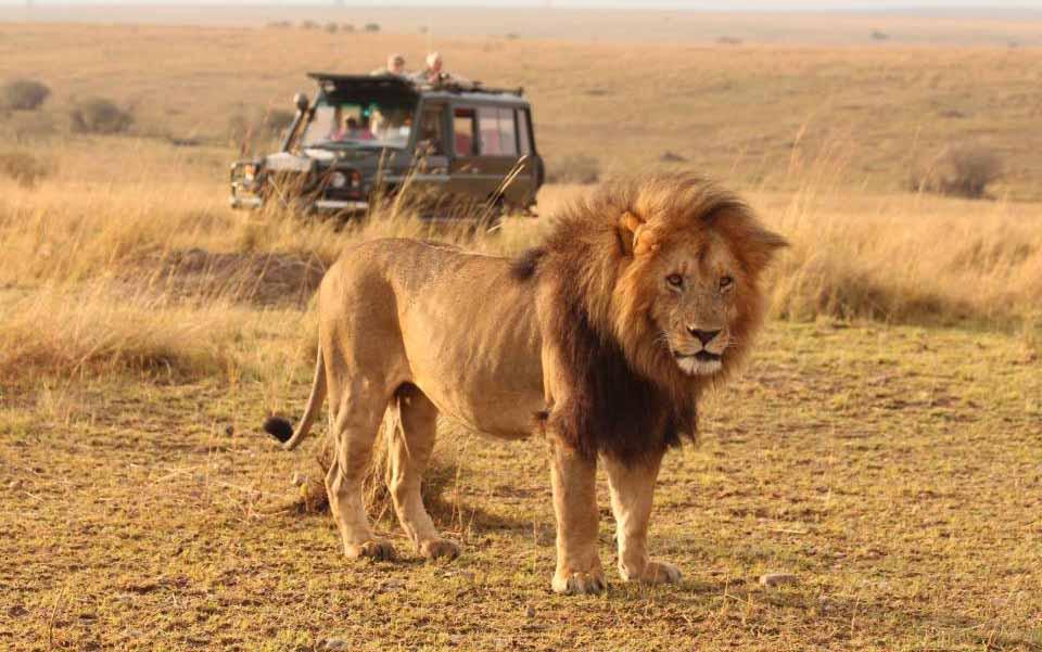 6 days Kenya budget safari