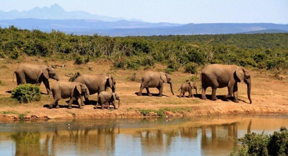 8 days Kenya Tanzania wildlife safari