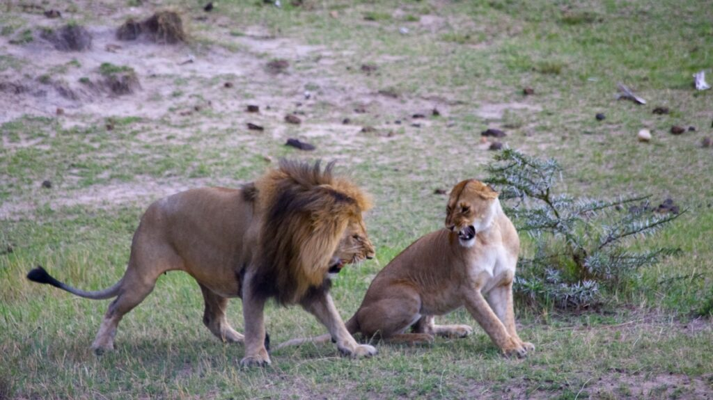 8 days affordable Kenya safari vacation