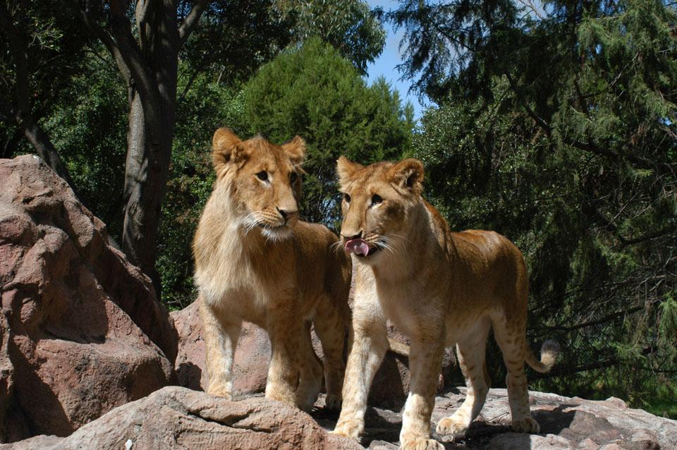 8 days best classic Kenya safari trip