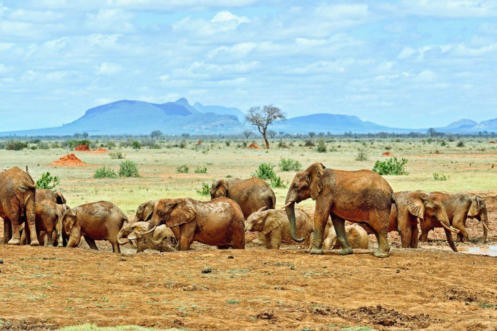 8 days budget Kenya wildlife safari
