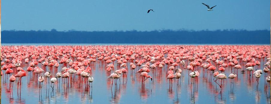 Kenya Tanzania Budget Wildlife Safari